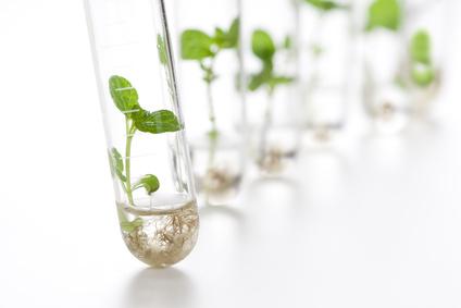 lab-plants